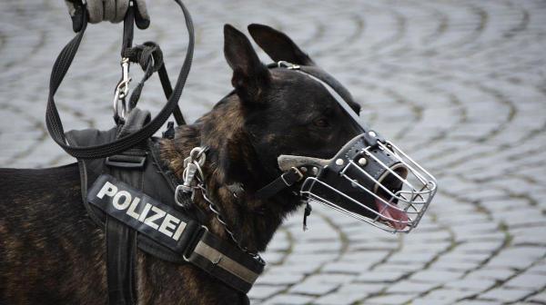 Bild: Polizeihund beißt Radfahrer