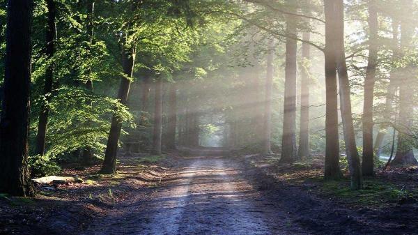 Bild: Vorsicht im Wald